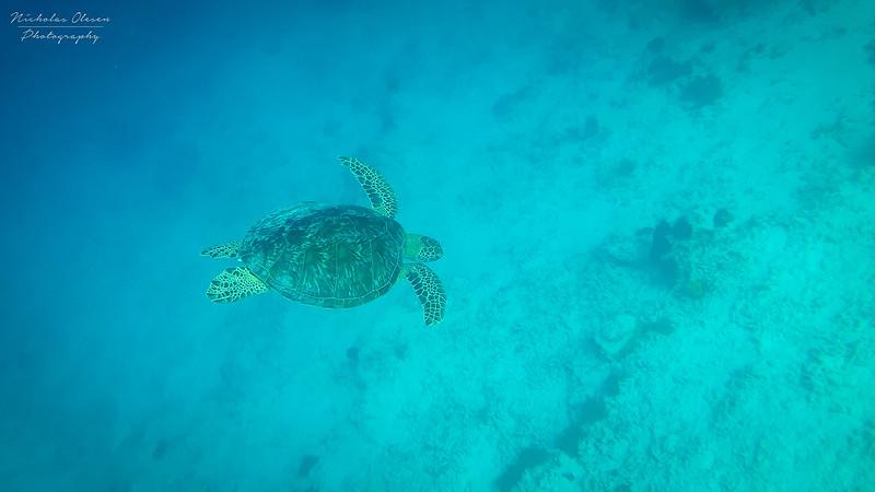 Indonesia | Gili Trawangan Turtle