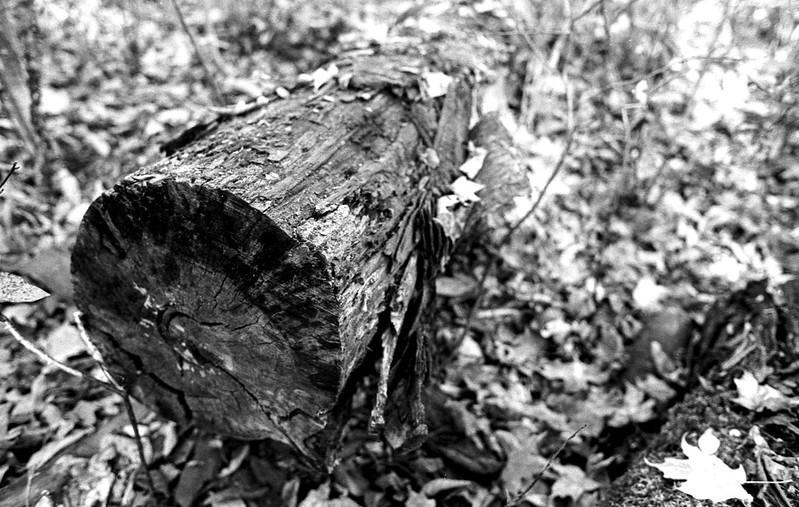 Cut Log_