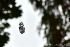 Levitating Leaf