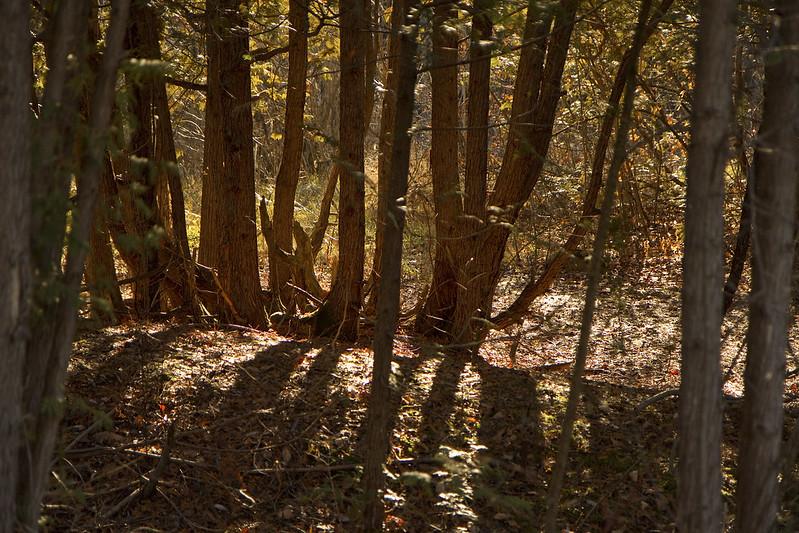wooded area jackson creek
