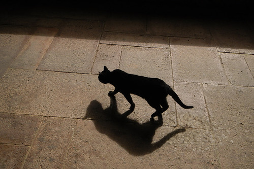 A small black cat and his shadow tread softly across the plaza of The hills of chestnut trees surrounding Valvanera, an 11th century monastery in Spain