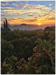 Sunrise over Chianti vines