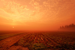 Furrows, Mist And Sunrise