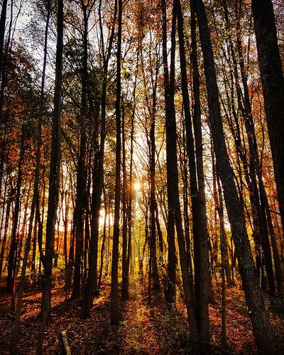 fall autumn sunrise colors