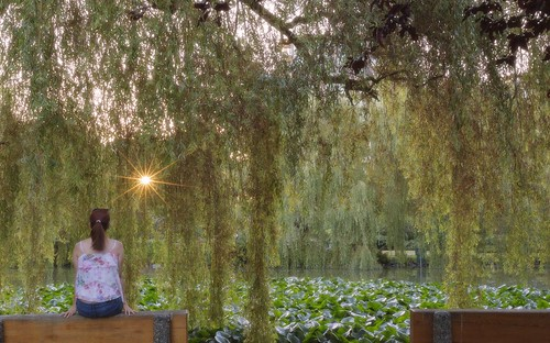 vancouver portraitphotography field summer amazing beautiful portrait sunrise green park trees morning flare light