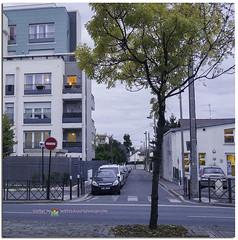 Automne - Autumn #automne #autumn #saison #season #light #ouverture #sensibilité #nature #outdoor #exterieur #birds #duck #oie #park #parc #france #livrygargan #life #photography #nikon #vitesse #vie #joie #respirer #picture #colors