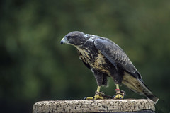 Newent International Bird of Prey Centre