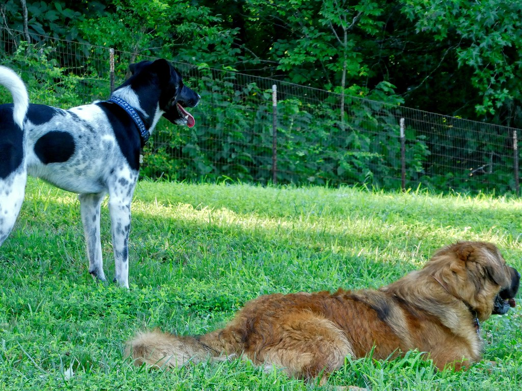 Grays Road Dog Park Aug 3, 2017 at 8-45 AM Aug 3, 2017 at 8-046