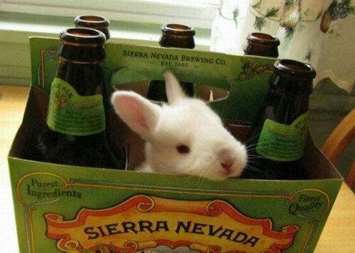 well-hopped