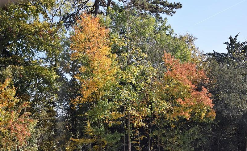 Autumn 11.10 (4)