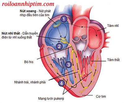 Bệnh rối loạn nhịp tim: Nguyên nhân và những cách trị hiệu quả