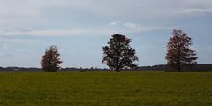 Three Trees Fall