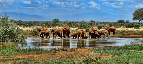 elephant herd. From Africa Overland Tours: What You Need to Know