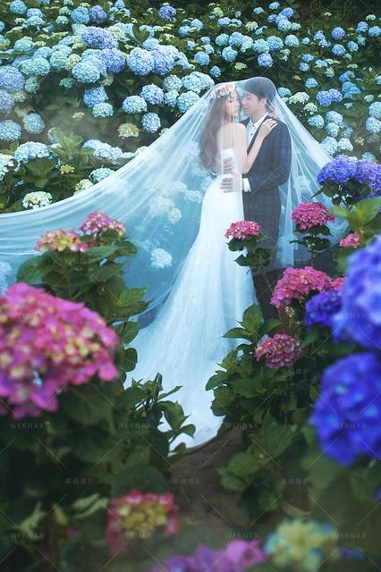 桃園婚紗,台中婚紗,婚紗照,婚紗攝影,拍婚紗,自主婚紗,一站式婚紗,拍婚紗,結婚照,婚紗推薦,花海婚紗,婚紗外拍景點, 繡球花花海