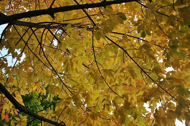 Trinity Autumn