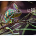 chameleon by fiftymm99