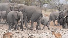 Etosha NP & Kunene Region, Namibia, 3DR Solo, Go Pro Hero 4, Black Edition & Nikon, D5300