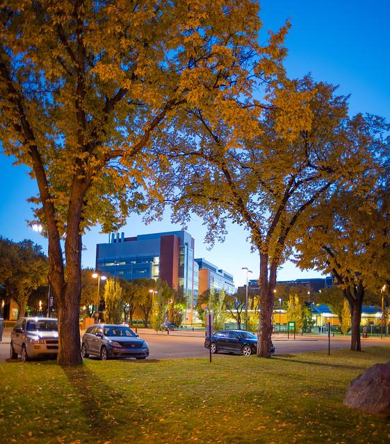 Blue Hour University