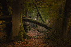 Across an autumn forest