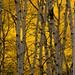 Aspen Boles by Nancy King Photography