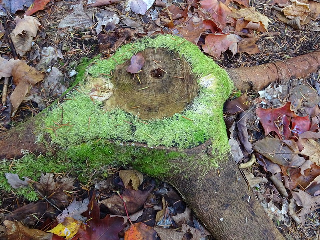 Stump and Moss