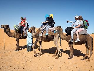 Preparing for a camel trek