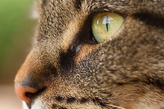 Kitty close-up