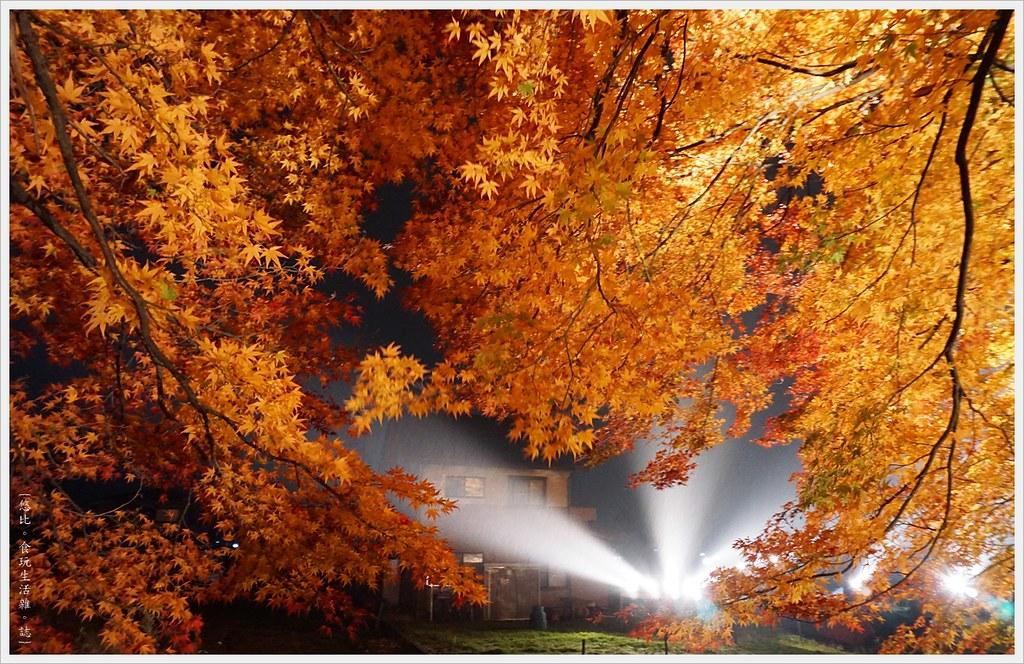 紅葉迴廊-紅葉祭-夜楓-25