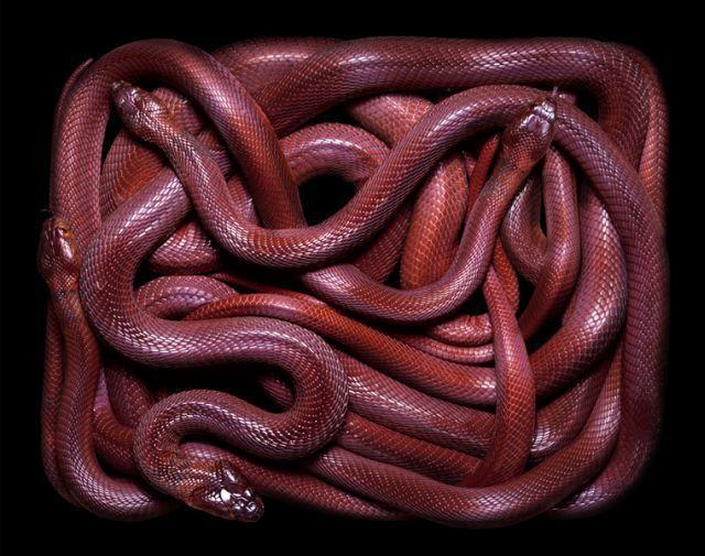 snake_art_06