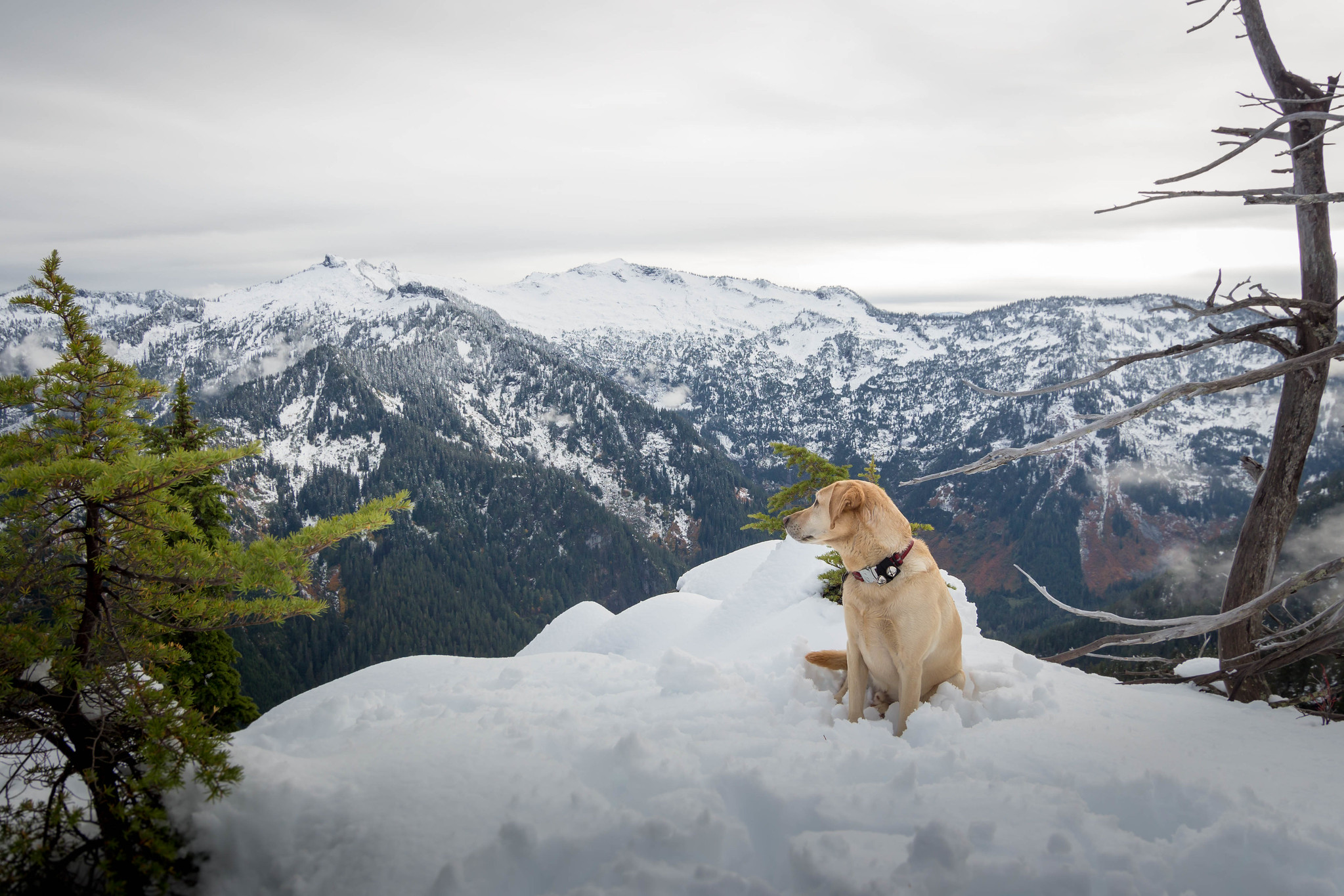 Summit dogs on Bing Peak