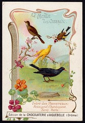 French Tradecard - Songbirds