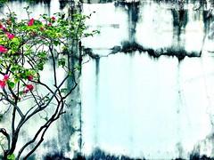 #minimalist #sidewalk #garden #bangkok