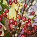 Winter Boquet