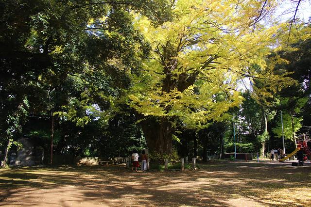 akasakahikawajinja_0046