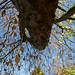 Botanic Gardens Edinburgh Oct 2017 -79