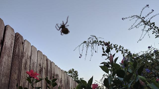 spideralt