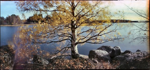 pinhole longexposure birch sea realitysosubtle 6x12 f200 ektar nolens