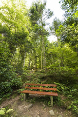 Bench on the forest trail