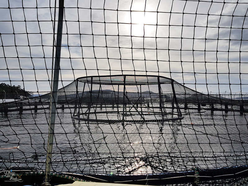 tasmania seafood seduction cruise salmon farm