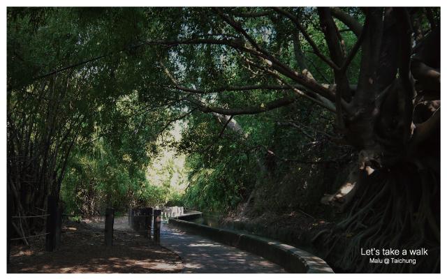 知高圳步道(雪蓮步道)-6