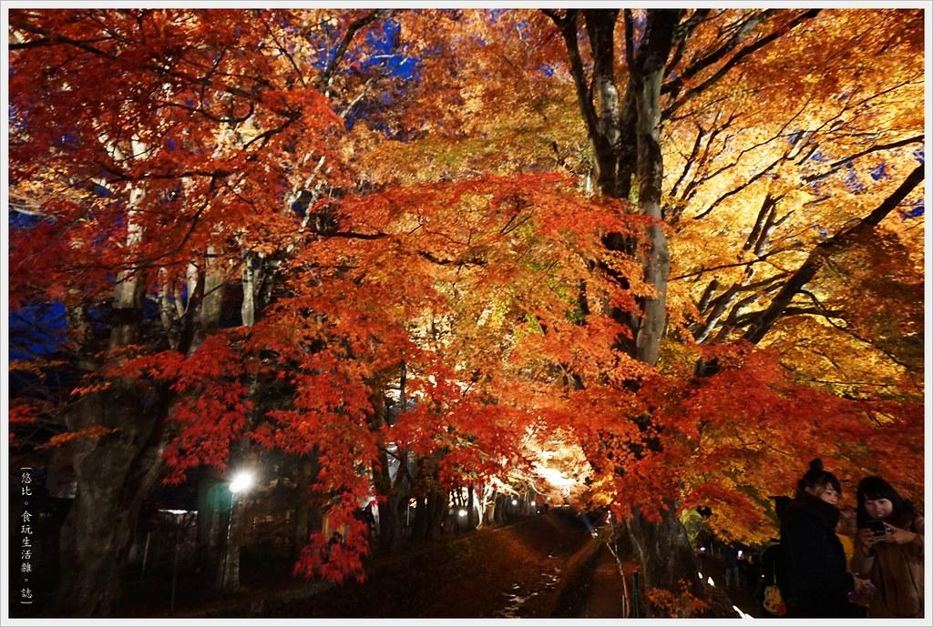 紅葉迴廊-紅葉祭-夜楓-11