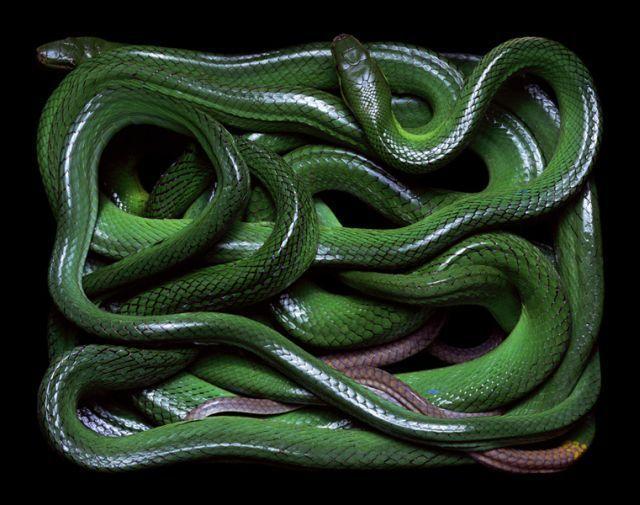 snake_art_26