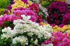 其他花卉及植物 2017b