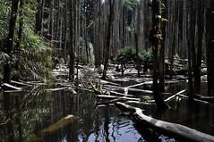_DSC0048 Lotus Forest