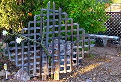 Trellis, Bench, and Fence