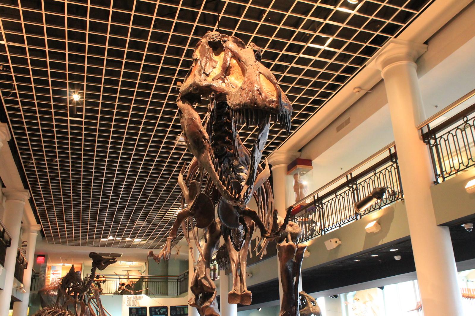 Natural Science Museum Philadelphia Coupon