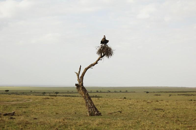 Maasai Mara 1 16