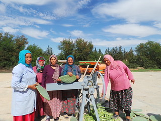 Thu, 10/19/2017 - 13:29 - Happy ladies posing with the cactus chopper