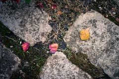Autumn Marks