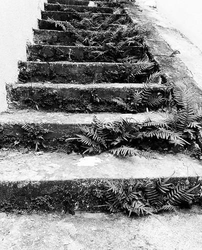 Escada para Nárnia...